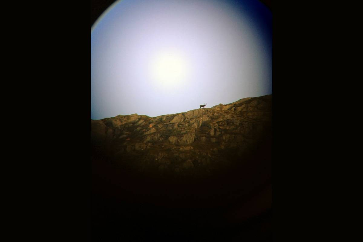 "HIMMELSJÅ: Langt der oppe i ""himmelsjå"", en bukk tegner seg i profil og vekker en jakthug som får både adrenalin og blodtrykk til samme høyder. Foto: Andreas Mørkve"