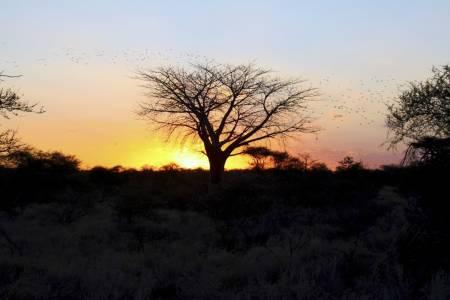 Solnedgang jakt afrika