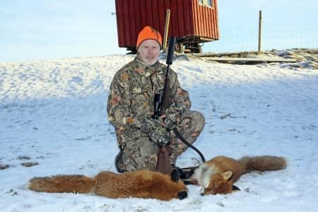 Hvordan jakte red med åtejakt, lokkjakt og hund