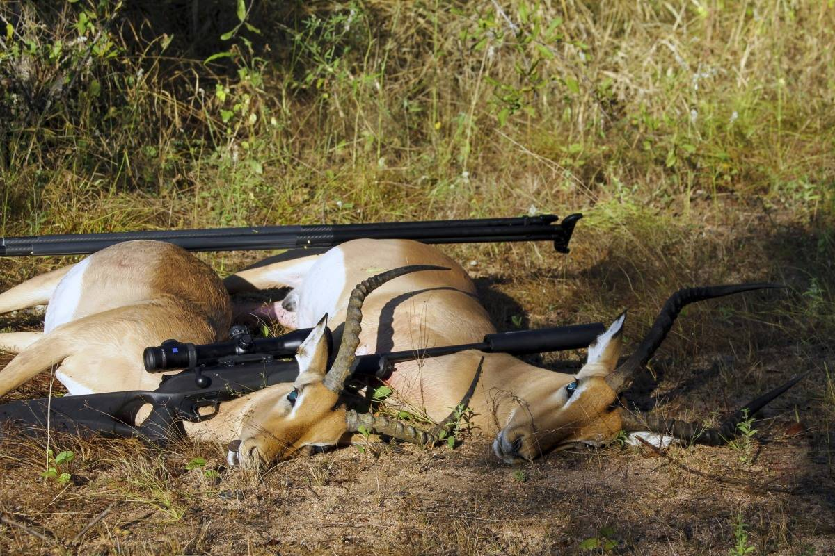 29 SKUTTE DYR: Jeg har skutt mange dyr i Afrika, men aldri fått så korte fluktstrekninger som med Ecostrike.