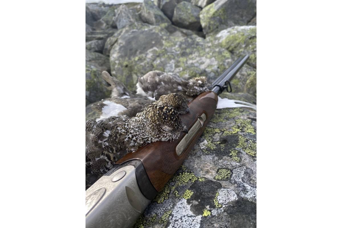 ryper saltfjellet jakt fangst