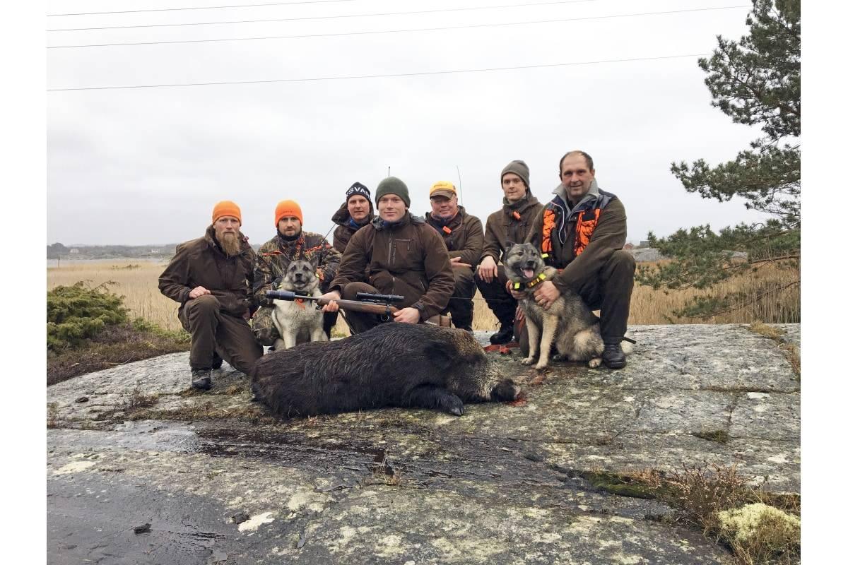 Villsvinjakt i Norge, jakte villsvin på Hvaler