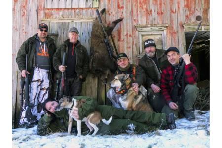 Villsvinjakt i Aremark, villsvin Østfold