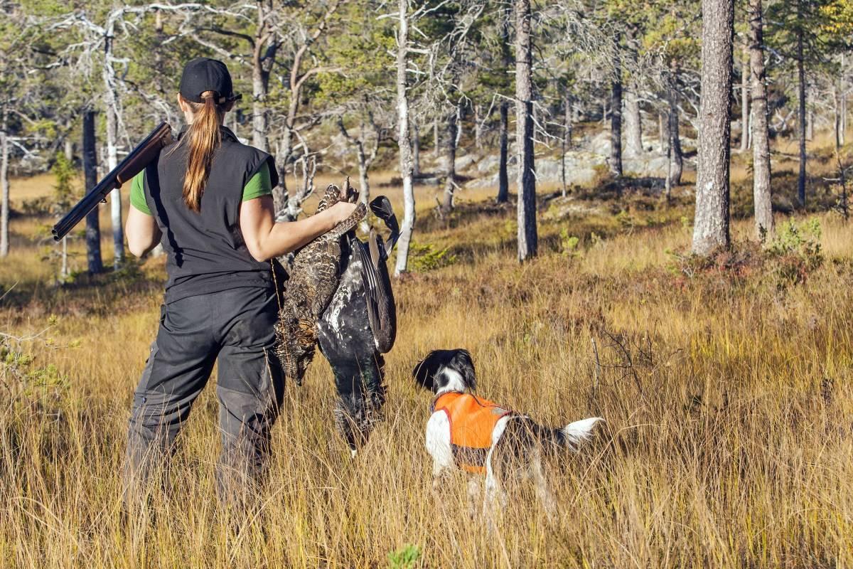 Skogsfugljakt, hvordan jakte skogsfugl, stående fuglehund, skjellende fuglehund