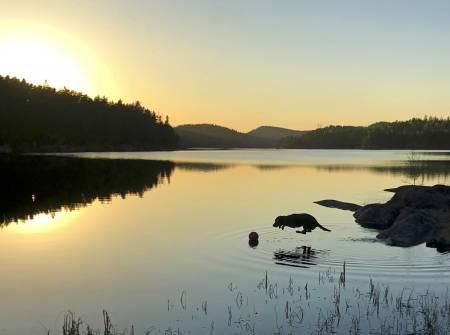 Gøy på vannet: Ikke alle hunder er så gale etter bading som jaktlabradoren Frøken. Hun hentet like gjerne ballen selv og kastet den på vannet, før byttet ble tatt av en real stupbomber. (Foto: Linn Kristin Haavaldsen)
