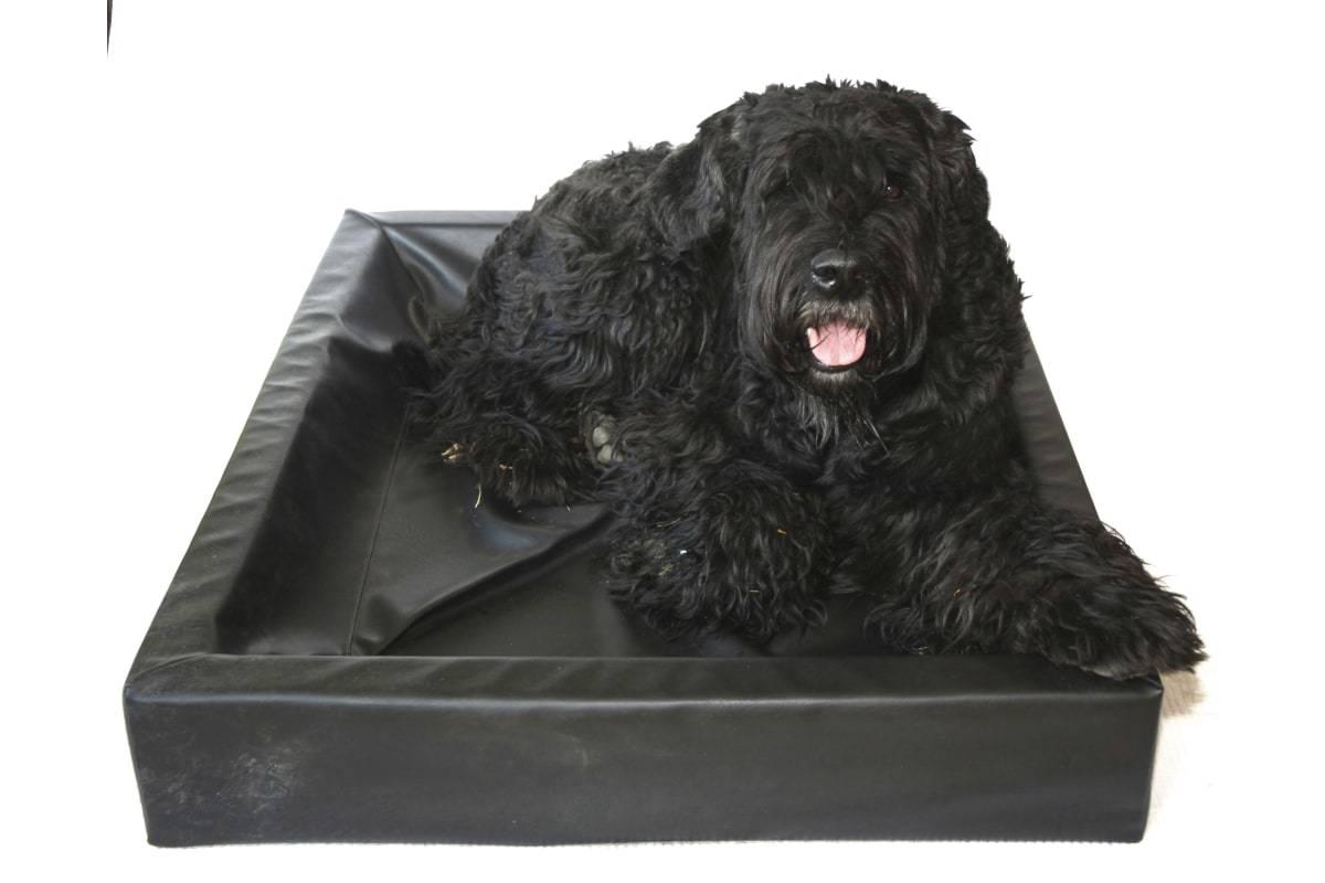 Komfortabel: BIA hundeseng byr på en høy grad av komfort for den firbente kameraten.