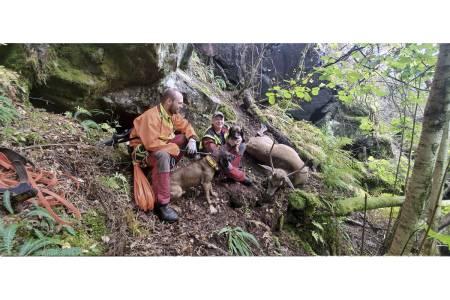 I mål: Etter et langt ettersøk ble bukken funnet av dobbelekvipasjen. Unghunden ble brukt på sporing i 600–700 m, før den erfarne hunden overtok med løsarbeid i tre km.