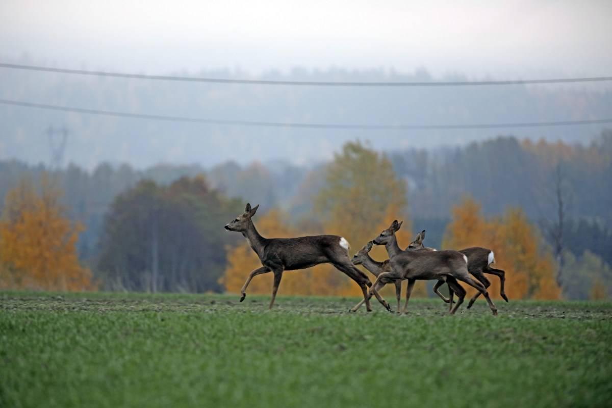 Økologi, biotoper, habitater, viltstell, viltforvaltning