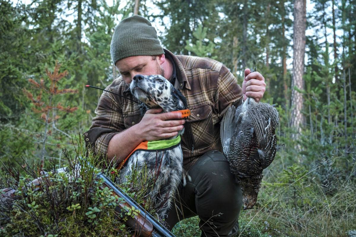 Jaktdressur fuglehund trene engelsk setter