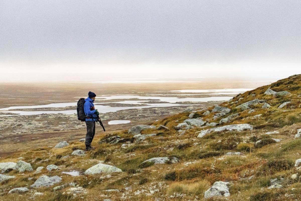 rypejakt Hardangervidda, hvordan jakte rype