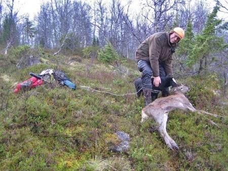 hjortejakt, kalvejakt, jakte hjortekalv, fri avskyting, NINA