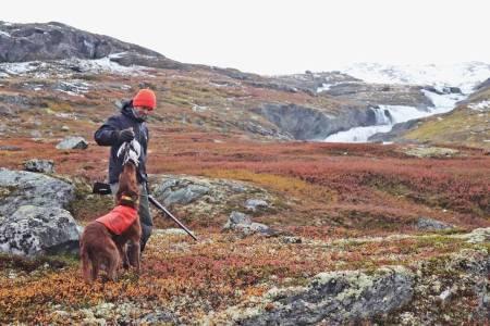rypejeger jeger jakt med fuglehund