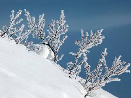 Romjulsjakt: Pausen i jakta midtvinters gjør at vinterrypene ikke er jaktbare i årets siste uke.