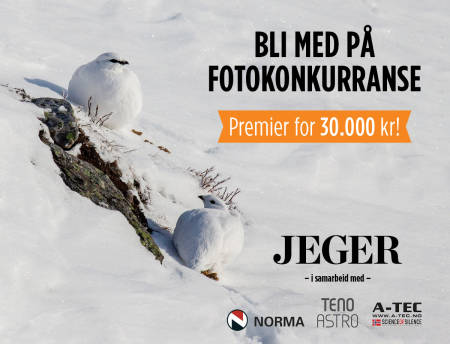 Bilde av fjellryper i vinterdrakt til JEGERs fotokonkurranse Foto: Åsgeir Størdal