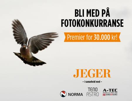 JEGERs fotokonkurranse 2021 jaktbilde ringdue duejakt Foto Åsgeir Størdal