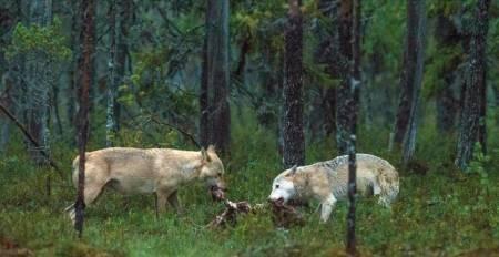 ulv jo stenersen