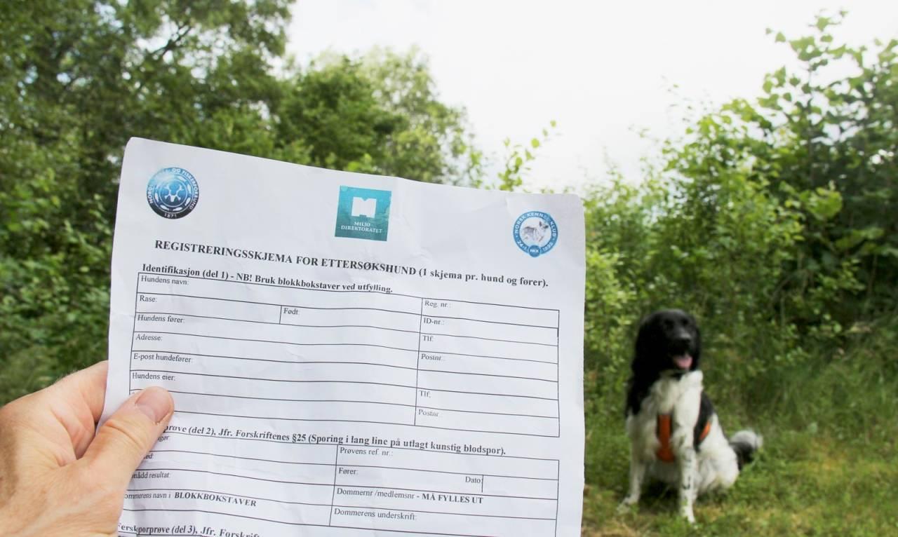Helhet: Når ettersøksdommeren avgir dom etter prøven, husk at det er et øyeblikksbilde av både hunden og deg.