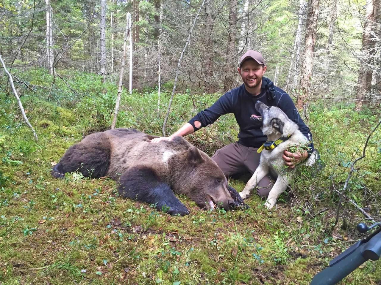 Fokus: Martin Brenne mener fokus og engasjement betyr alt når man skal trene inn en unghund på bjørn. Her sammen med Grom etter vellykket jakt (foto: Martin Brenne)