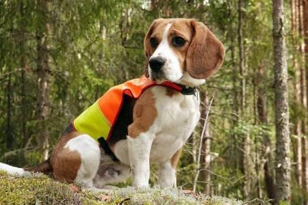 Hundeutstyr, tester og anbefalinger, hunde utstyr, hund