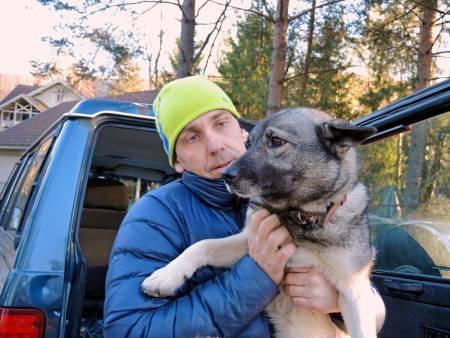 jakthund, elghund, savnet hund