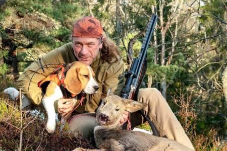 rådyrhund beagle kortbeint løs på drevet halsende hund boghøyde 41 cm