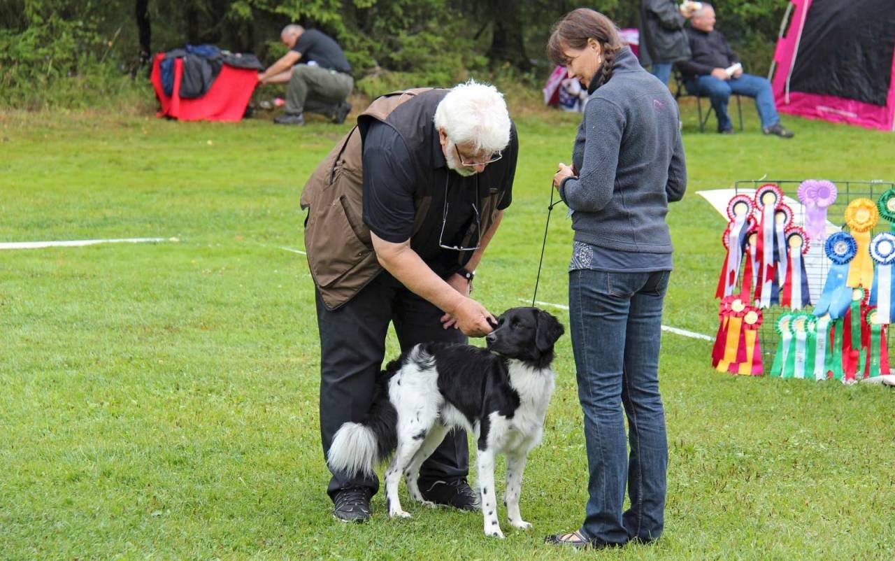 Håndtering: Hunden skal være vant med å bli håndtert av fremmede mennesker. Her viser Storm (stabijhoun) og Helga-Mari at de har vært en tur innom utstillingsringen før.
