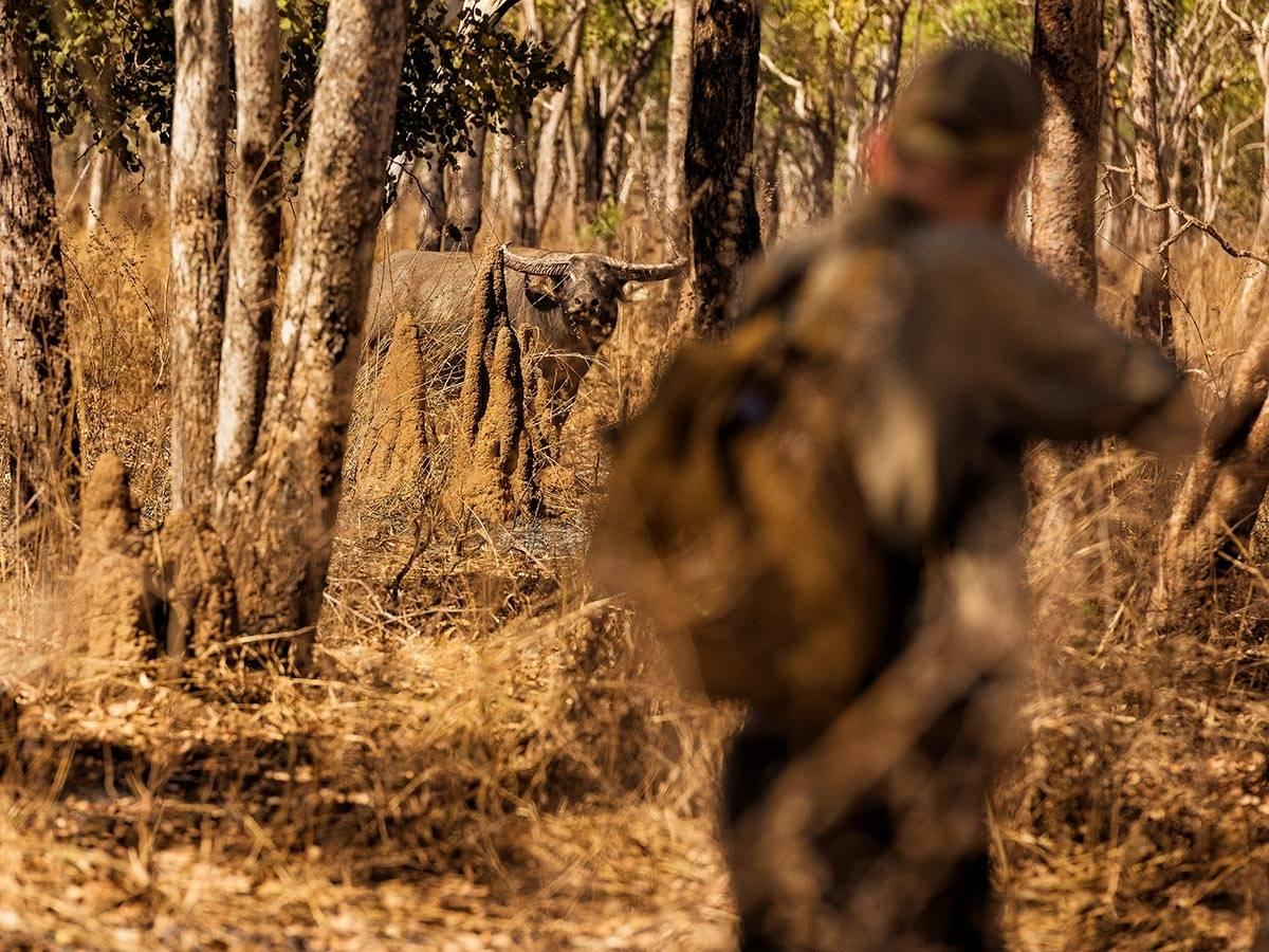 Bøffeljakt i Australia