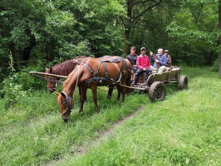 Råbukk, rådyrjakt, Romania, jaktreise