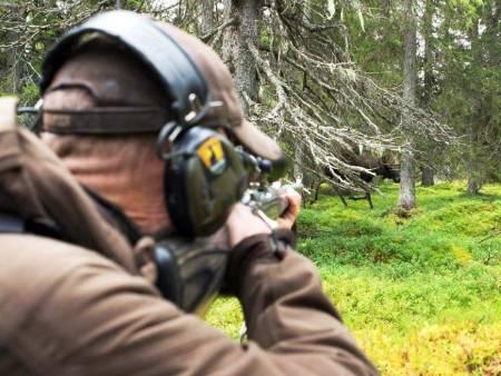Jaktreiser Skandinavia, elgjakt nord sverige