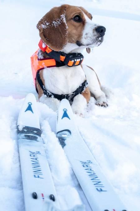 Hvis Vovs velger: Hundeførerne har fått et godt alternativ for flatt terreng og lange turer.