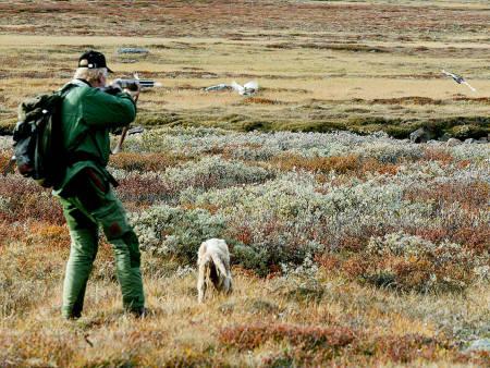 En hund reiser to ryper på rypejakt. Foto: Åsgeir Størdal / JEGER