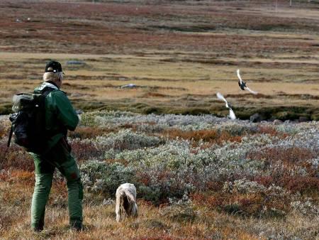 rypetaksering Fefo, rypetaksering Finnmarkseiendommen, rypejakt Finnmark, rypejakt 2021