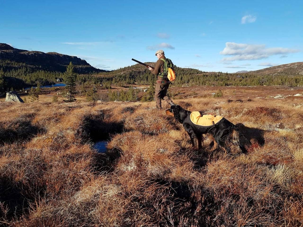 SITRENDE STAND: Hund og jeger i salig samhørighet over trykkende fjellfugl.