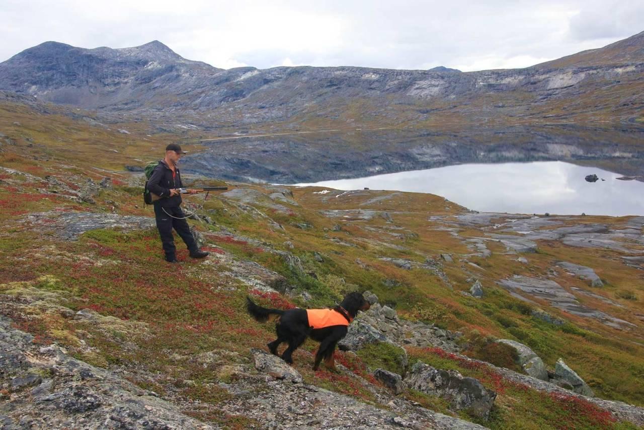 KLAR FOR OPPFLUKT: Hulter til bulter langs vannet bor det fjellryper og liryper. Mange nøler med å ta hunden til slikt terreng, men Rune tilhører den andre leiren: Han mener spak fjellrype er perfekt provokasjon og dermed ideell hundetrening.