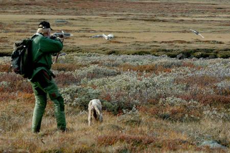 Nå er tallene etter skogsfugl- og rypetakseringa hos FeFo klar. (foto: Åsgeir Størdal)