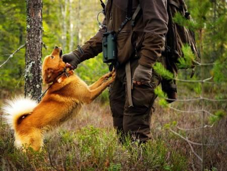 skogsfugljakt, finsk spets, skjellende fuglehund
