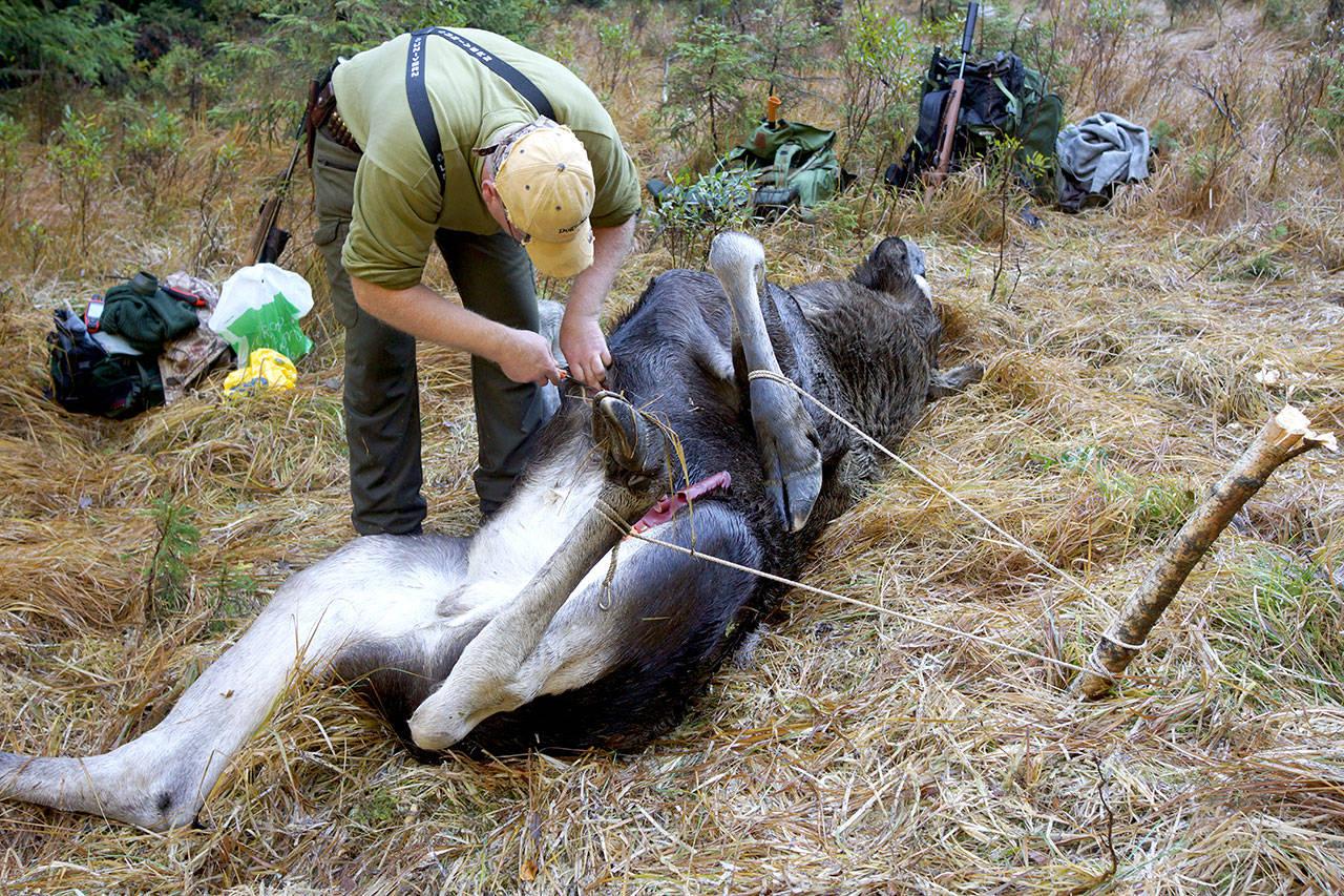 elg skrantesyke vinje foto Åsgeir Størdal