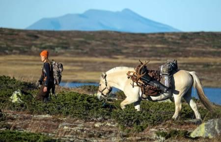 jakt med hest, villreinjakt, villrein, Karen Anna Kiær