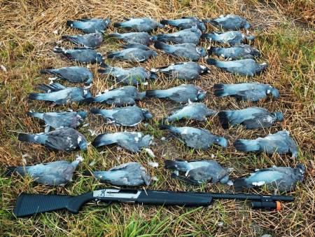 slakting av fugl, skjære ut brystfilet, behandle skutt fugl, viltbehandling