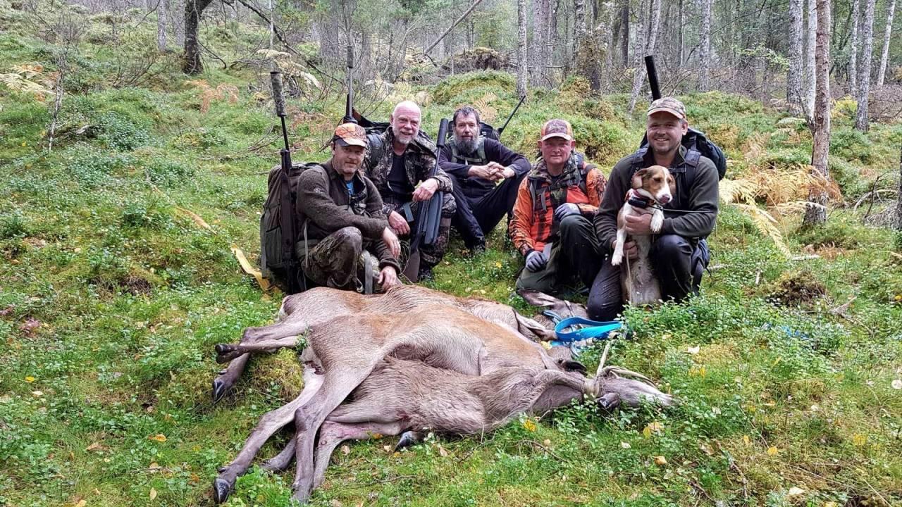 Viltkjøtt, mørning, hjortekjøtt, hjortejakt,