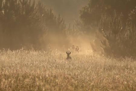 Hjortejakt, slakting av hjort,